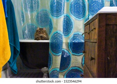 A Siberian cat peeking out of an old style bathtub.