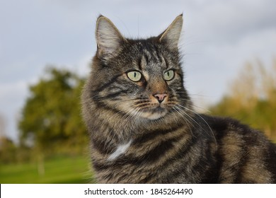 Siberian cats are loved around the world and are considered to be the national cat of Russia They are extremely intelligent and loyal pets which love to greet the owner at the door upon returning home