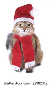 Siberian Christmas cat