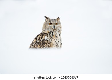 Siberian eagle owl taken in Russia during winter