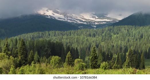 Siberian mountain taiga, mountains in the clouds, Altai