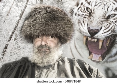 siberian tiger with open mouth attacking an elder caucasian man with beard and fur cap in winter forest