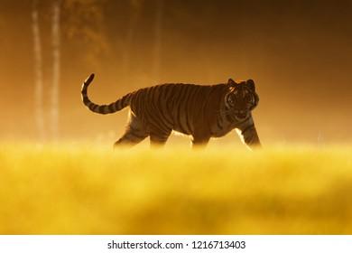 Bengal Tiger Cutaway Scene Figurine