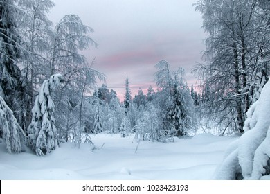 Siberian winter, snowy winter, frosty winter. Wood is filled with snow, snow-covered forest. Snow boss, snowcap on branches and tops of fir trees. Siberian taiga