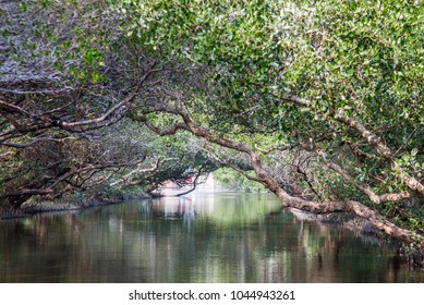 Sicao Mangrove Green Tunnel,famous attractions in Tainan Taiwan,Small Amazon   in Taiwan,River channel