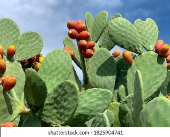 Sicilian Opuntia cactus plant with ripe prickly pears cactus fruits on the blue sky background