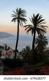 Sicily Palms