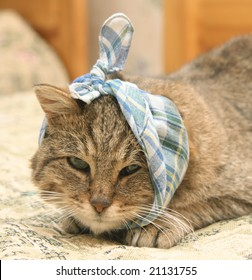 Sick cat with a checkered bandage on a head.