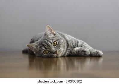 gato enfermo en una mesa con medicinas