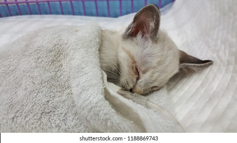 a sick cat sleeping on fabric in the cage treating by fluid therapy.