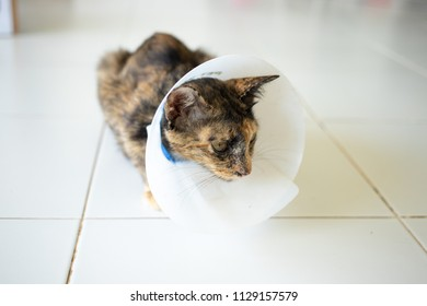 Sick cat wearing a funnel collar