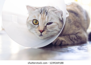 Sick cat. Cat wearing a protective buster collar (also known as an elizabethan collars)