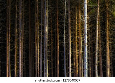 Sick coniferous forests in the Western Tatras, Slovak Republic