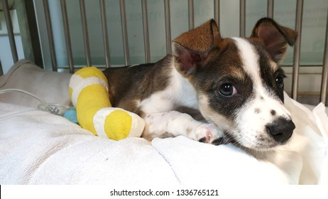 a sick dog with colourful bandage lying inside the cage at animal shelter after sugery operation looking camera.