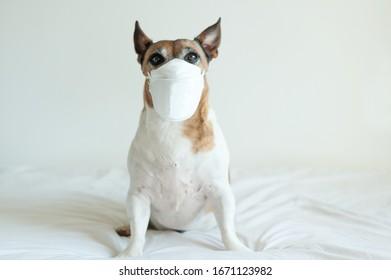 Sick dog wearing a mask