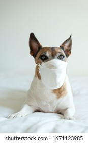 Sick dog wearing a mask