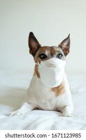 Perro enfermo con máscara