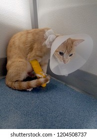 sick, injured orange kitten with cone on head
