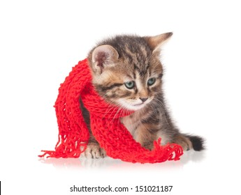 Sick kitten with a scarf tied round a neck isolated on white background