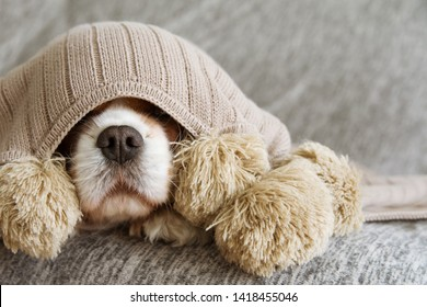 SICK, PLAYFUL  OR SCARED CAVALIER DOG COVERED WITH A WARM  TASSEL BLANKET