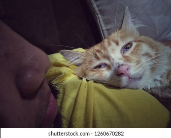 sick poor cat has lethal illness lay on its owner body, feels tried and sleepy to the dead