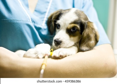 Sick puppy in animal hospital