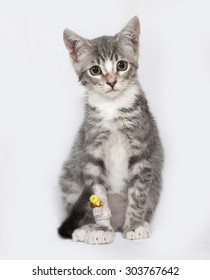 Sick and white striped kitten sitting on gray background