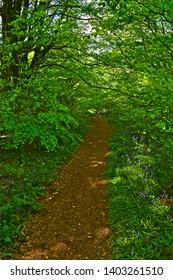 Sidbury, Devon  / England - 5/11/2019: A pretty woodland walk follows a pathway through the trees at Putts Corner Caravan & Motorhome Club Site near Sidbury, Devon.