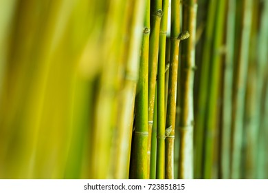 side of bamboo