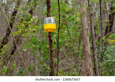 Side bottom view of a yellow pheromone fly trap hanging from a tree.
