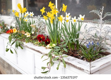 Side close up on yellow daffodils in an old window planter box
