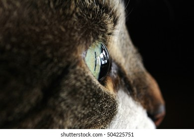 Side closeup of the eye of a cat
