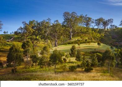 Side hill Australian rural landscape eucalyptus gumtree in countryside