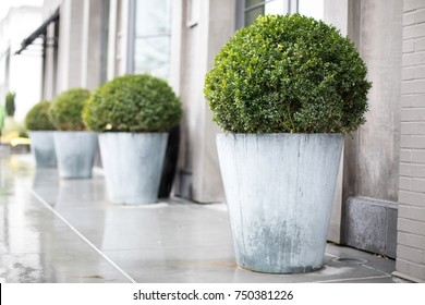 Side perspective on a row of outdoor planters with green round bushes, on a wet sidewalk outside of a modern apartment building