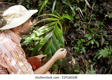 Side portrait of middle aged Caucasian ecologist with briefcase studying leaves of green exotic plant while conducting environmental studies outdoors, exploring nature conditions in rainforest