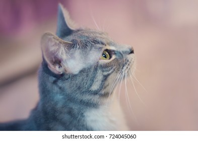 Side Profile of a Cat