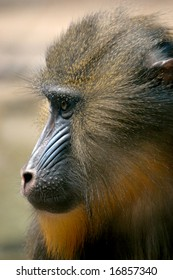 Side profile of forest monkey