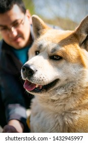 A side profile of orange akita dog in the focus of the photo. The man behind is blurred. Akita dog is looking aside and have relaxed expression.