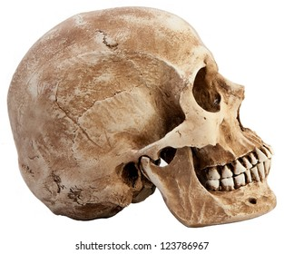 Side profile view of human skull