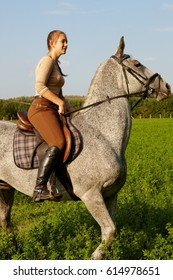 Side view of beautiful purebred horse and rider in nature.