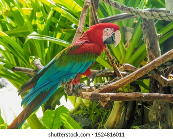 Side view of a beautiful red and green macaw parrot bird