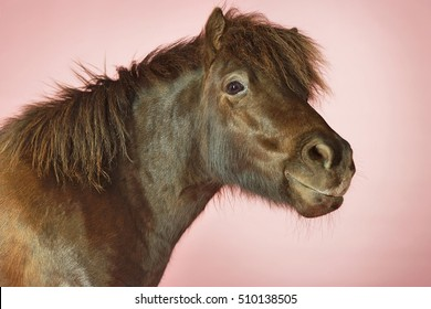 Side view of a brown horse against pink background