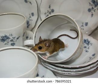 Mouse Kitchen Images, Stock Photos & Vectors | Shutterstock
