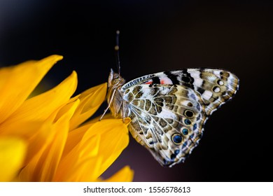 Side view of butterfly sitting on sunflower petal