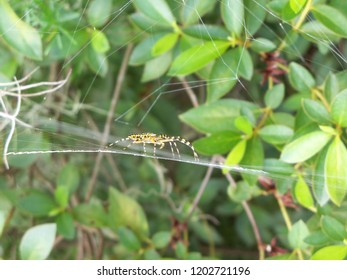 Side view of a colorful garden orb weaver spider