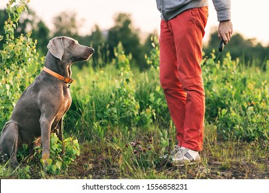 Side view of content male in casual clothing sitting squat in front of Weimaraner with grey wool sitting on plants at meadow on blurred background