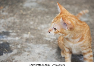 side view of  curious young red kitten