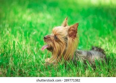Puppies Panting Images Stock Photos Vectors Shutterstock