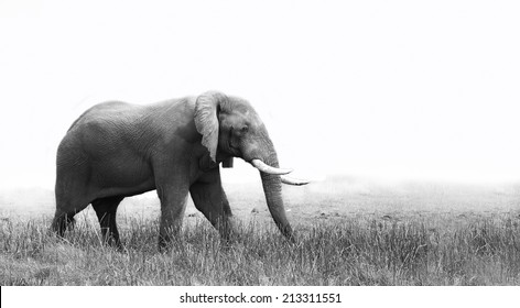Side view of an elephant