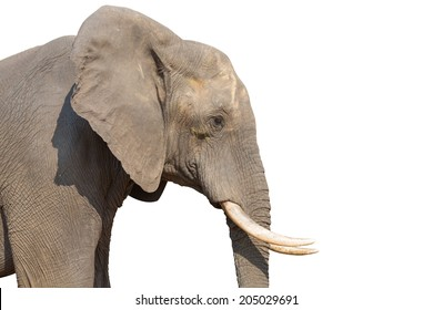 Side view of Elephant head on white background with clipping path